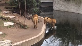 Try Not To Laugh Watching Funny Animal Fails Compilation | 25 Of The Best Animal Videos