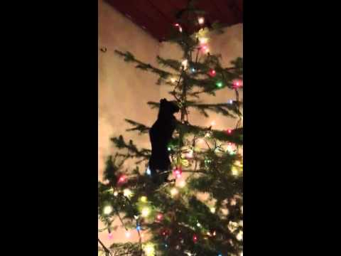 Xmas tree kitty saga