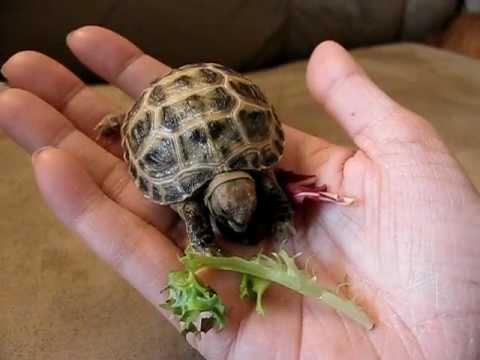 Hand Feeding Baby Tortoise