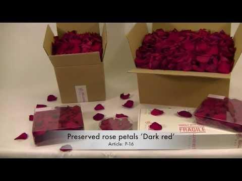 Preserved rose petals 'Dark red'
