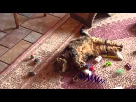 Gracie's catnip mouse