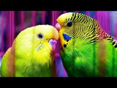 How to Determine a Bird's Sex | Pet Bird