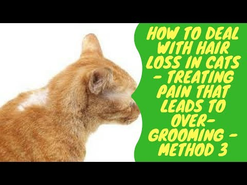 How to Deal with Hair Loss in Cats - Treating Pain that Leads to Over Grooming - Method 3