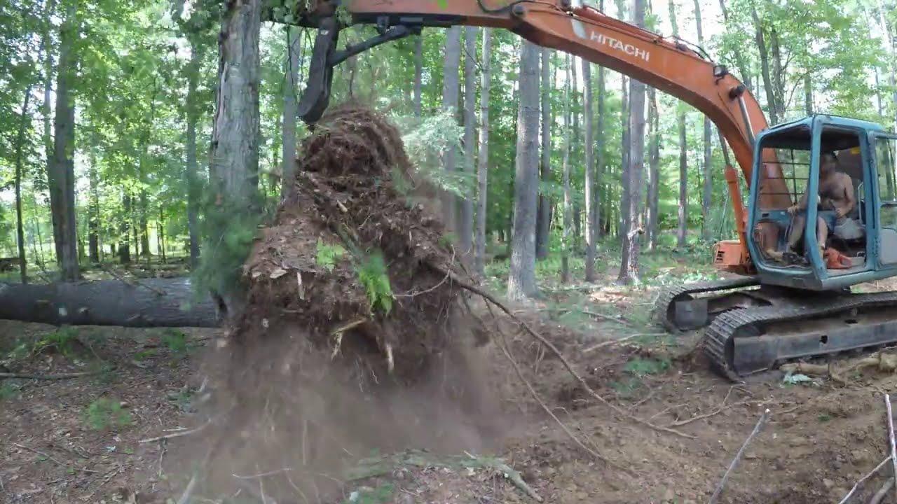 Cutting down saw mill trees