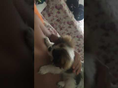 My puppy licks my NIPPLE