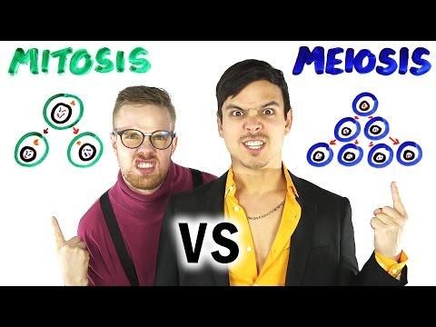 Mitosis vs Meiosis RAP BATTLE!