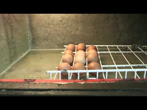 DIY Egg Turner for Chicken Incubator in Action