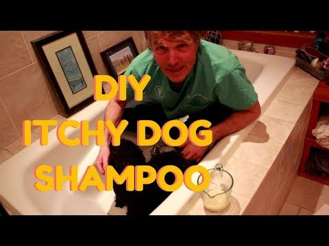 DIY Dog Shampoo for Itchy Skin