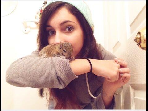 My Pet Squirrel Luno