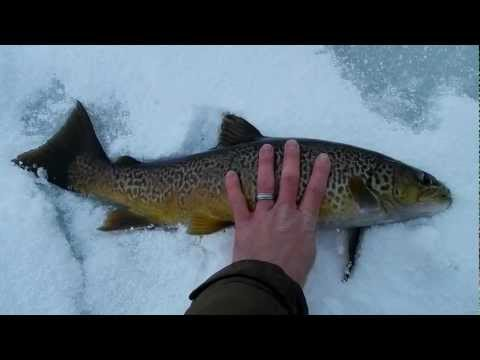 Big Tiger Trout from Currant Creek Reservoir