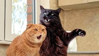 Cats Funniest Creatures In Animal Kingdom Funny Cat Compilation