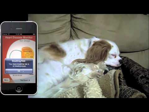 Dog Heart Disease Monitor App