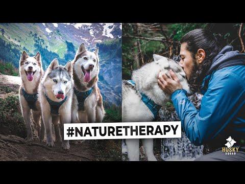 Epic Hiking Trails With Huskies - Mt Hood Oregon