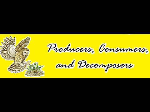 Producers, Consumers and Decomposers in Ecosystem