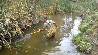 carp spear fishing