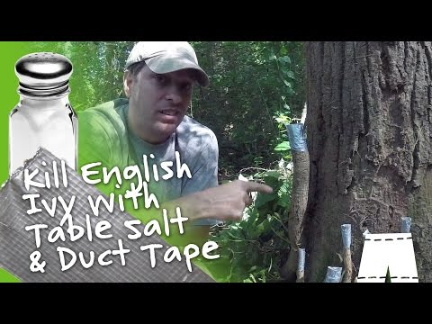 How To Kill English Ivy Vines With Salt & Duct Tape DIY