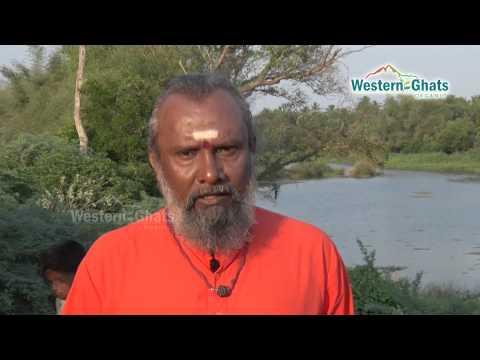 Varagu arisi - வரகு அரிசி