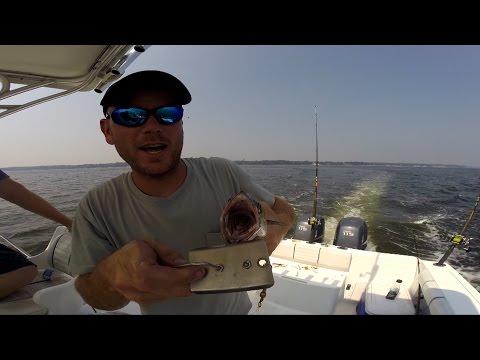 Trolling for Spanish Mackerel Out of Chesapeake Beach Sept 2015