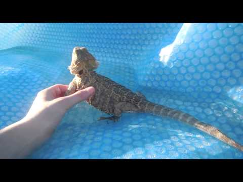 HOT TUB(pets and friends)