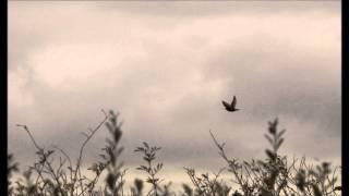 Recondite - Levo (Gabriel & Dresden edit)