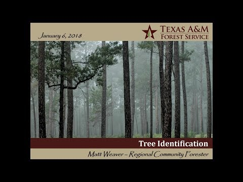 Texas Envirothon | Forestry - Tree Identification