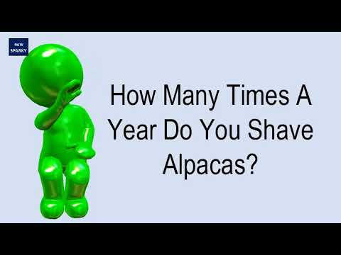 How Many Times A Year Do You Shave Alpacas?