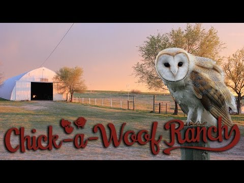 Clean out the Barn Owl Box (Surprise included)