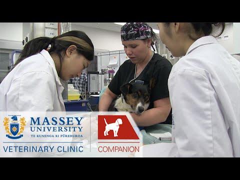 Veterinary Teaching Hospital I Behind the scenes at Massey Vet School