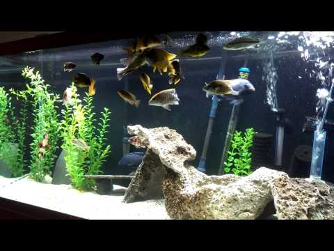 Deep tank clean=beautifully clean tank and fish!