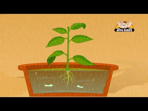 Learn about Plants in Hindi - Photosynthesis