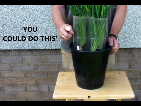 Grow Vegetables in small buckets in a small space. You could do this.