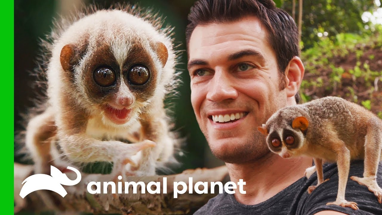 Dr. Evan Meets One Of The World's Most Fascinating Primates   Evan Goes Wild