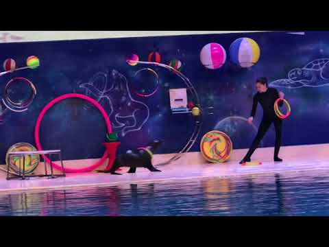 The Best Baby Dolphin Show in Greek Park at Dubai