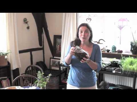 Juliette's Kitchen- Dandelion Tincture