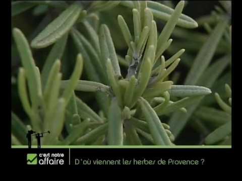 D'où viennent les herbes de Provence?