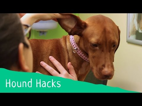 Hound Hacks: Tip 14 - How to clean your dog's ears