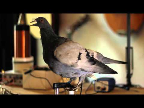 Animatronic pigeon facehead.co