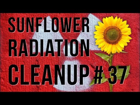 Sunflower Radiation Cleanup - Dinner Table Facts# 37
