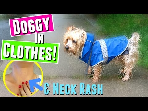DOG IN CLOTHES! & NECK RASH :(