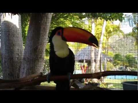 Paco the Toucan Takes a Bath