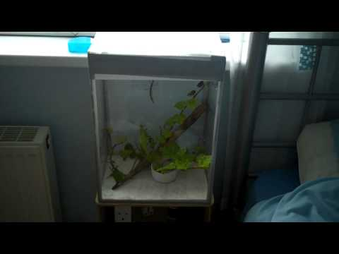 Completed stick insect tank