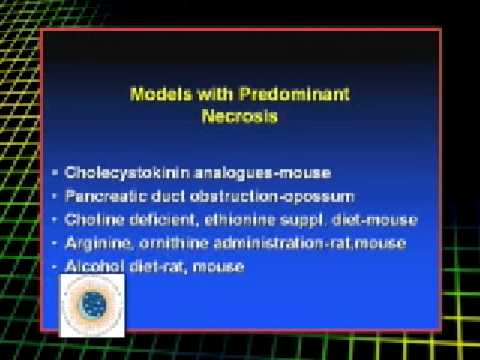 Stephen Pandol, MD - Animal Model for Pancreatitis