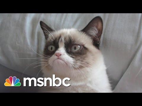 Did Grumpy Cat Make  $100 Million? | All In | MSNBC