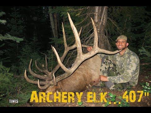 AMAZING Utah Archery Elk Hunt-SURRENDER...407