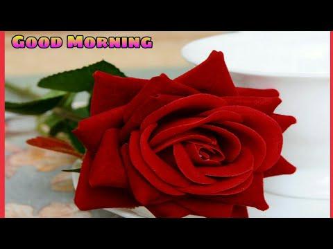 Good Morning Video, Wishes/Greetings, Good Morning Beautiful Shayari in Hindi, WhatsApp Status|