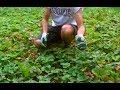 Jak łatwo rozmnożyć truskawki