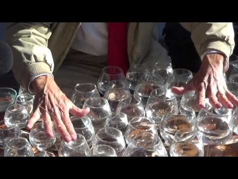 Glass Harp Street Performance by Jamey Turner - Ode to Joy