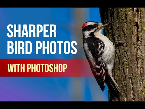 Bird Photography: Sharpen and Reduce Noise in Photoshop!