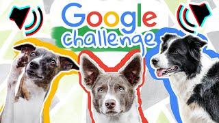 Ako reagovali moje psy na povely cez Google prekladač?