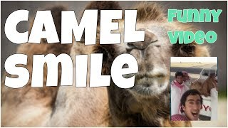 Camel smile lol 🔸 7 seconds of happiness FUNNY Video 😂 # 384